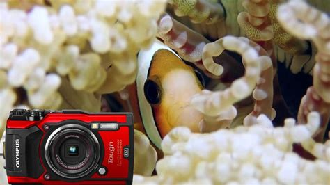 olympus tough tg  underwater macro video ikelite