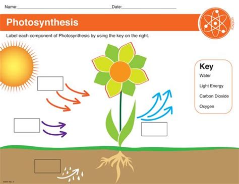 Photosynthesis Worksheet  Things To Learn  Pinterest  Photosynthesis, Worksheets And Activities