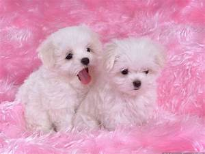 wich is the cutest Poll Results - Puppies - Fanpop