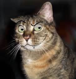 evil cat by wing z on deviantart