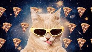 Cat Pizza GIF - Find & Share on GIPHY