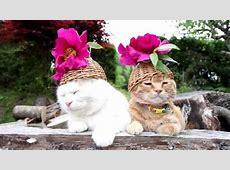 Katzen Bilder, die Sie zum Lachen bringen Haustiere