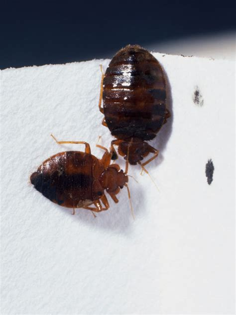 tactics  bedbug proof  house