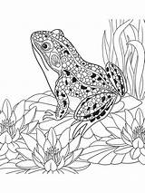Coloring Pages Zentangle Frog Adults Adult Mycoloring Printable sketch template