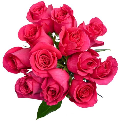 British rock group, formed in 1966: Rose - Pink Floyd - Stems Ship - Cut Flowers