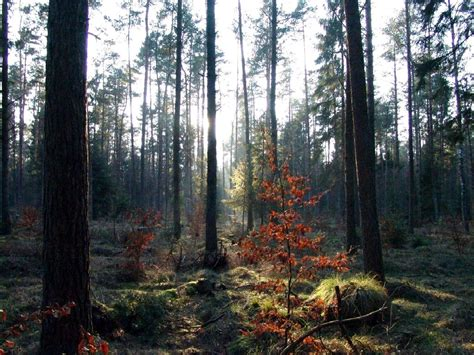 best forests in america top 28 forests in america olympic national forest forest in washington thousand the lost