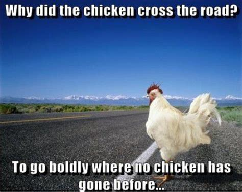 30 Most Funniest Chicken Meme Pictures That Will Make You Laugh