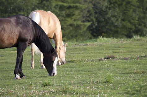 animals farm field horses grass domestic horse