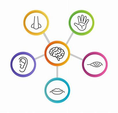 Sensory Evaluation Consumer Insight Techniques Training Tests