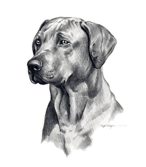 dog drawing cool dog art pinterest dog drawings