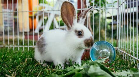 kaninchen tipps zur artgerechten haltung gvb hausinfo