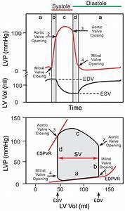 Cv Physiology  Ventricular Pressure