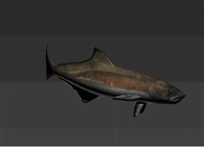 3d Cobia Fish Animated Rig Marine Rigged