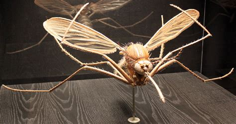 cycle de vie d une libellule
