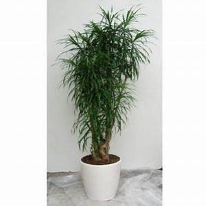 Plante Tropicale D Intérieur : 8 plantes d 39 int rieur faire pousser chez soi flore tropicale plante interieur plante ~ Melissatoandfro.com Idées de Décoration