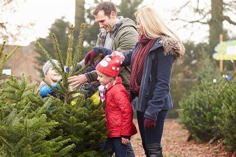 real christmas trees glasgow where to buy christmas trees in edinburgh and glasgow 4259
