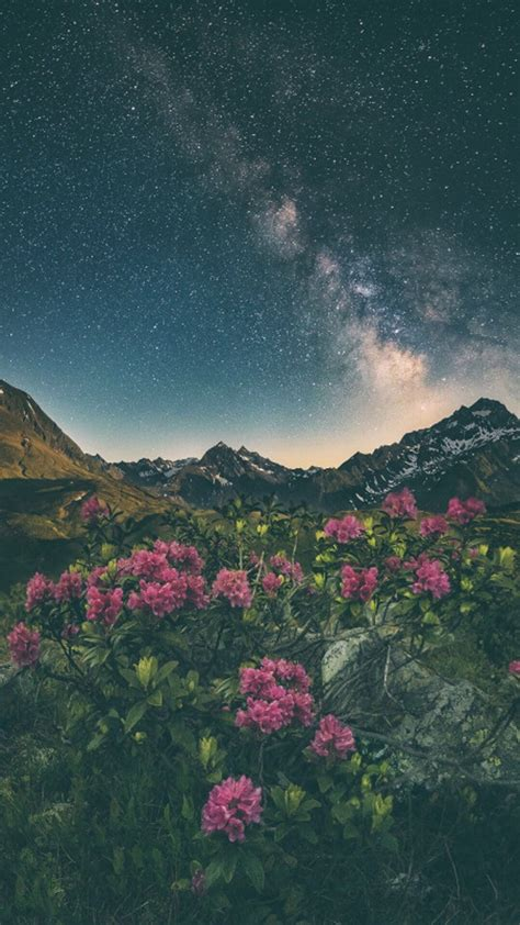 aesthetic nature wallpapers