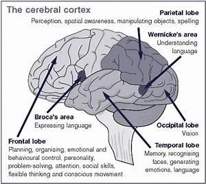 Lyme Brain Defined