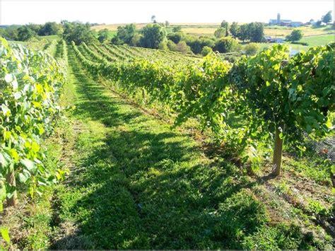 wedding venue disaster review  vernon vineyards