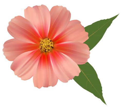 Orange Flower PNG Image Clipart Gallery Yopriceville