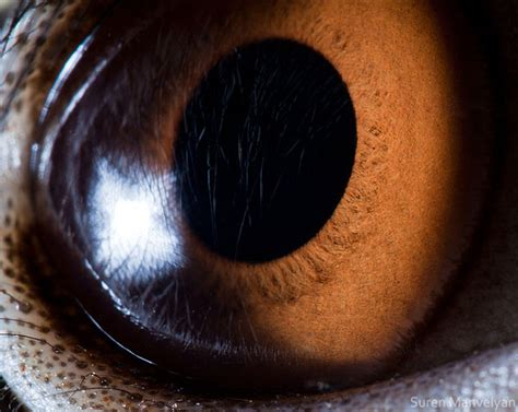 award winning macro photography  animals  human eye