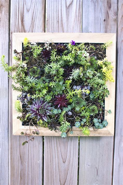 diy vertical garden top 10 diy outdoor succulent garden ideas top inspired