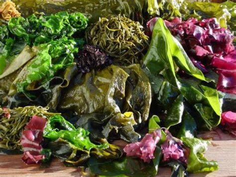 cuisiner algues et si cuisiner les algues était plus ragoûtant qu 39 il n 39 y
