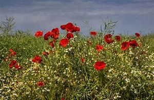 Blumen Im Sommer : fotos sommer mohn blumen 3060x2000 ~ Whattoseeinmadrid.com Haus und Dekorationen