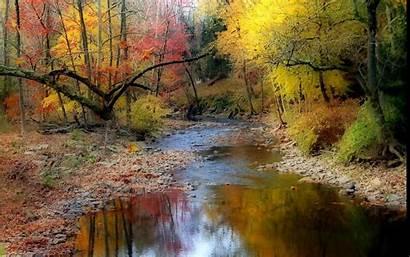 Stream Autumn River Trees Wood Reflection Stones