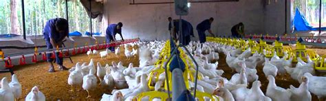 agriculture finance poultry farming allied bank limited