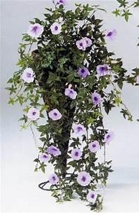 Petunien Samen Kaufen : petunien h ngebusch morning glory rosa ~ Michelbontemps.com Haus und Dekorationen