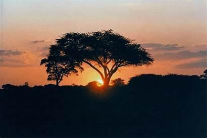 Africa African Animals Zimbabwe Hwange Sunset Park