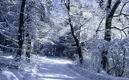 Forest Winter Woods Snow Trees Landscapes Roads