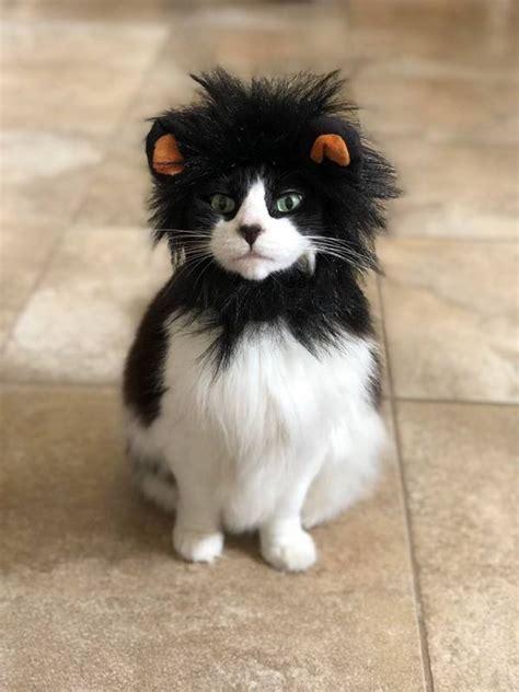 de chats remplies dhumour qui prouvent  nos