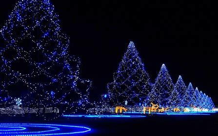 christmas tree images tree photos pictures hd download