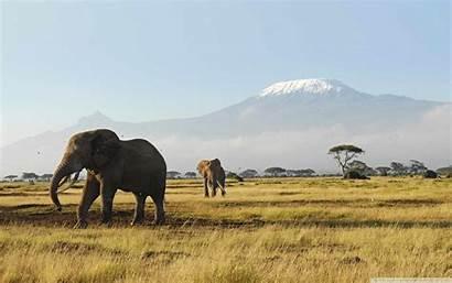 African Elephants Desktop Background Africa Elephant 4k