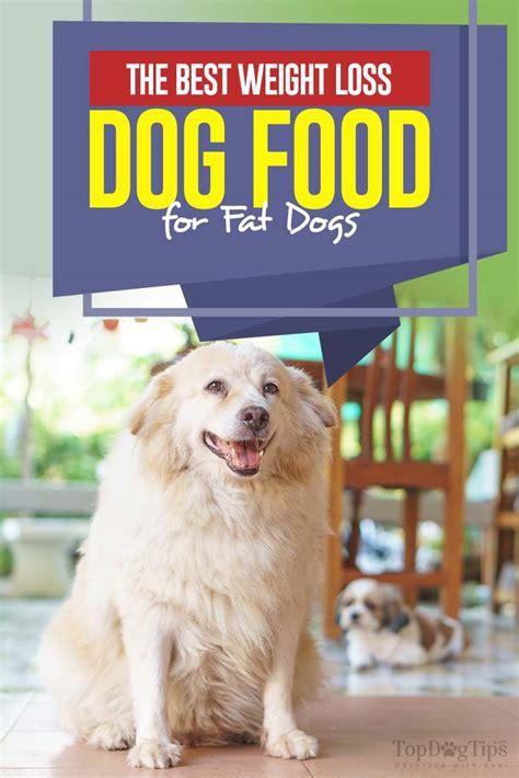 weight loss dog food  brands   homemade