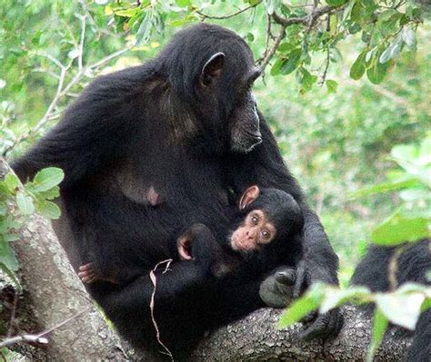 Scientists Find Missing Link Between Primate And Human