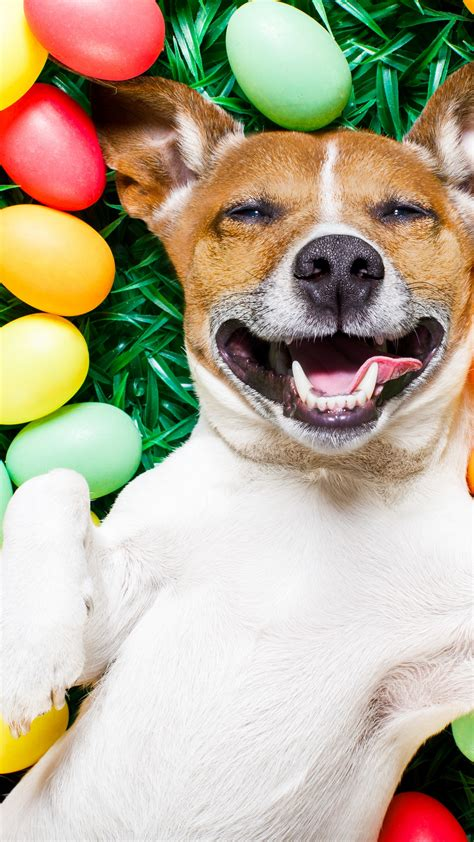 wallpaper easter eggs dog  animals