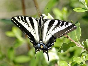 Black And White Images Of Butterflies 14 Desktop Wallpaper ...