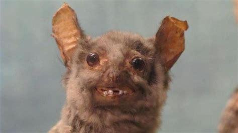 ugly bat meme generator
