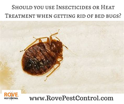 should you use insecticides or heat treatment when getting rid of bed bugs rove pest