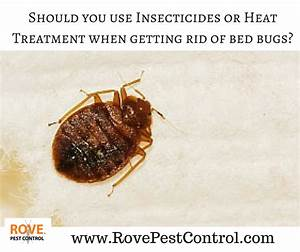 should you use insecticides or heat treatment when getting With bed bugs and heat