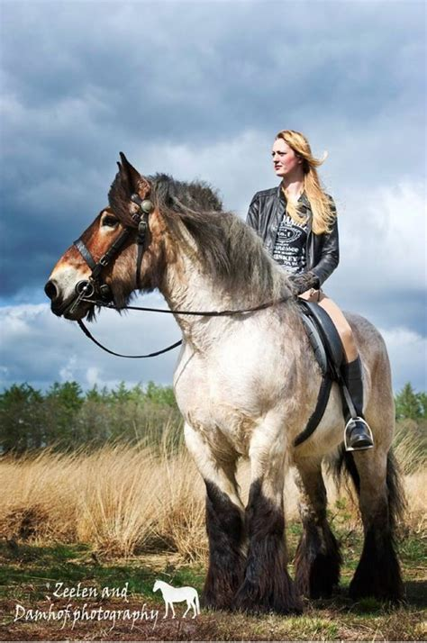 horse horses draft strong breeds huge largest brooklyn belgian supreme majestic riding ride hands breed pretty ak0 animals shire animal