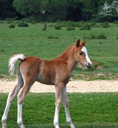 Cute Baby Foal Free Stock Photo - Public Domain Pictures