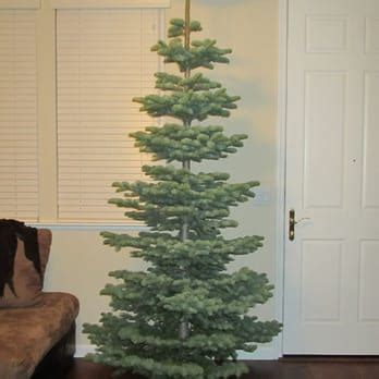 christmas tree lots in sacramento carmichael area fox trees closed home garden 6630 4th ave sacramento ca reviews photos