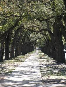182 Best Tunnels Of Trees Images On Pinterest