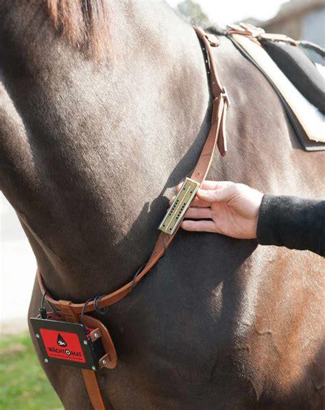 der waechtomat abfohlsystem waechtomat pferdeinhalator