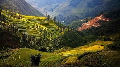 Vietnam Travel Wallpapers Rehahn Rice Fields Paddy
