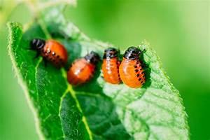 Garten Schädlinge Bekämpfen : sch dlinge im garten bek mpfen nat rlich und schonend ~ Michelbontemps.com Haus und Dekorationen
